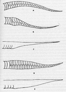 snakesex